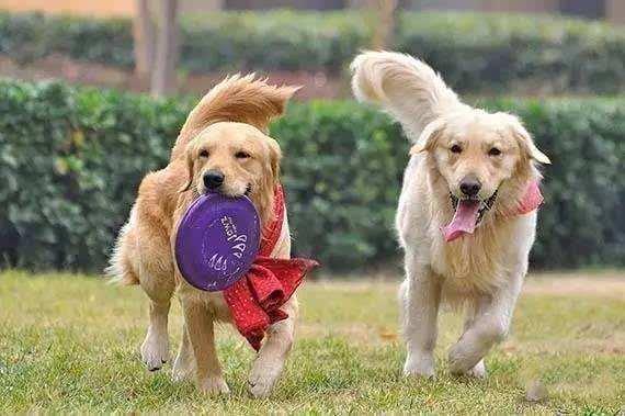 狗狗会学习吗?狗狗的学习能力